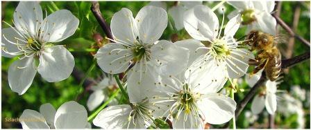 Kwitnący sad